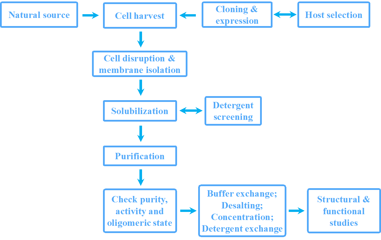 Figure 1. Workflow for membrane protein production and  characterization