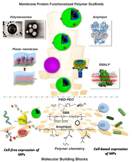 Polymeric supports for membrane proteins that are assembled from various building blocks