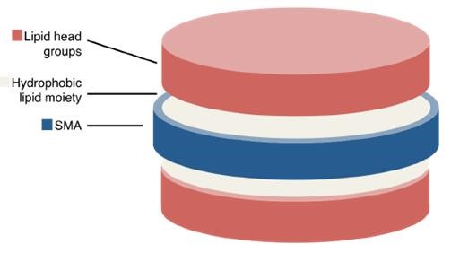 Diagrammatic representation of a disc-like SMALP